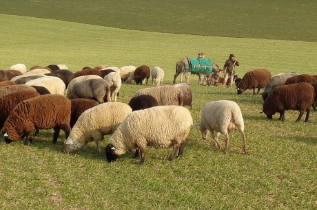 Le berger Jens et son troupeau