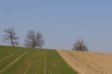 Les chênes vers Hinter-Bruch