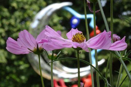 Des fleurs pour la lune. Jardin du MAHF